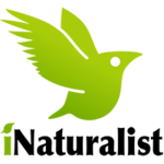 INaturalist logo.png