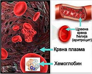 У нормобаричним условима хемоглобин   у еритроцитима обогаћен кисеоником, у процесима дисања је глави преносилац кисоника и угљен-диоксида.