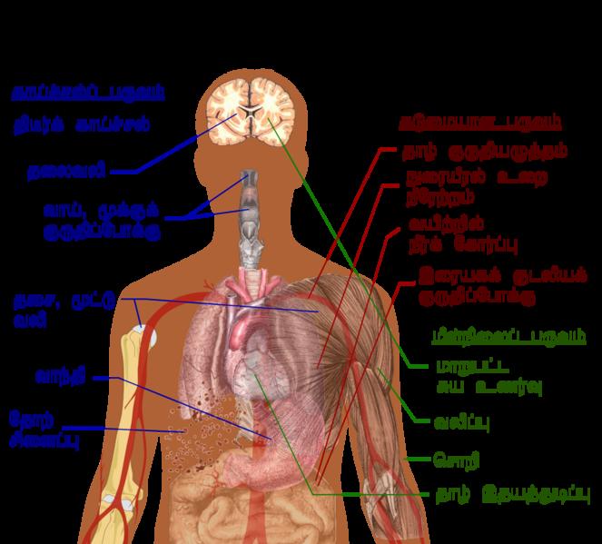படிமம்:Dengue fever symptoms tamil.png