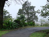 Agumbe morning.jpg
