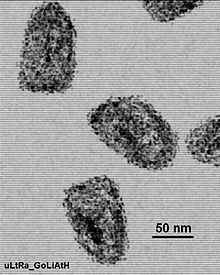 Elec micro of rahbdovirus isolate.jpg