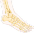 Ankle fractures 1 -- Smart-Servier.png