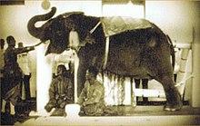 พระเศวตอดุลยเดชพาหนฯ ช้างสำคัญในรัชกาลที่ 9
