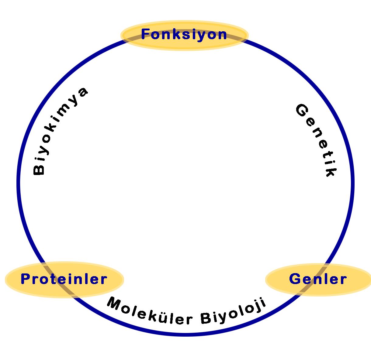 Dosya:molekuler biyoloji