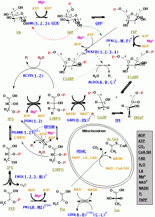shikimate pathway in plants pdf