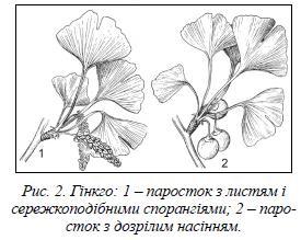 Рослини вуглеутворювачі jpg