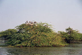 Keoladeo National Park.jpg