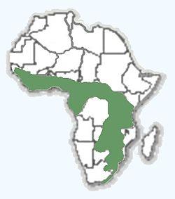 Мапа розповсюдженості щетинця