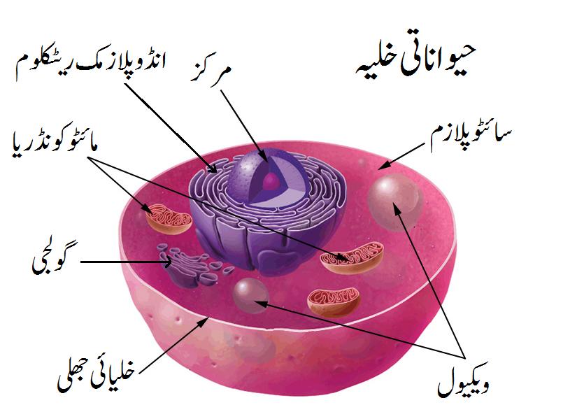 فائل:Animal cell parts in urdu.png - آزاد دائرۃ المعارف ...