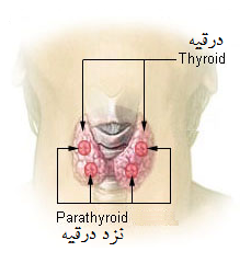 THYROID.PNG