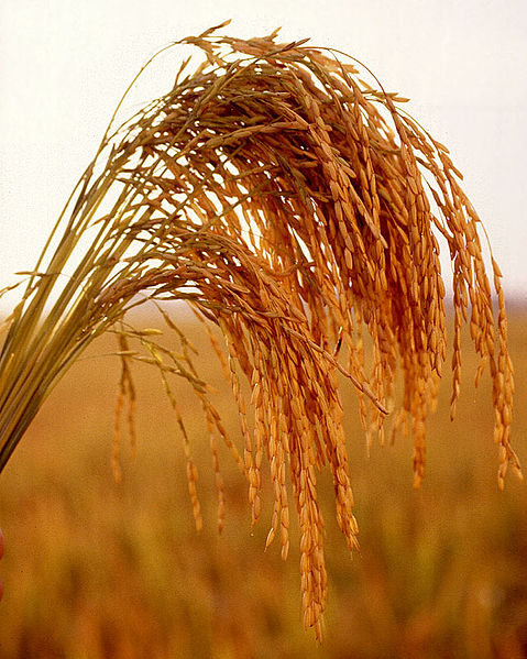 Tập tin:US long grain rice.jpg