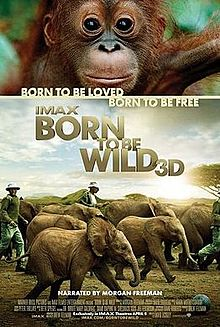 Born to be Wild 4.jpg
