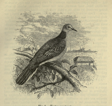 The Fauna of British India, including Ceylon and Burma (Birds Vol 4).djvu-27.png