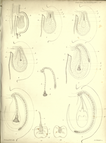 Transactions of the Linnean Society of London, Volume 19.djvu-219.png