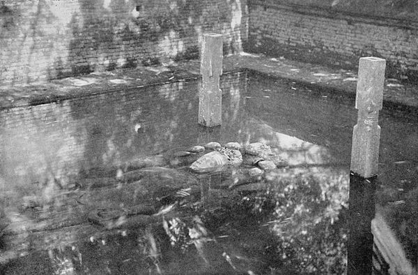 Black and white photograph of the submerged statue of Narain at Bajali.
