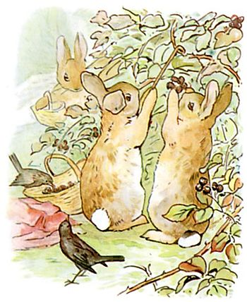 PeterRabbit6.jpg