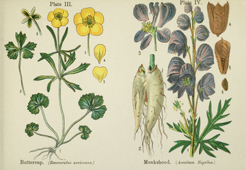 British Flowering Plants.djvu-41.png