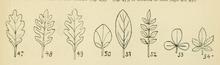 British Flowering Plants.djvu-23.png