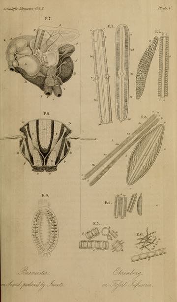 Scientific Memoirs, Vol. 1 (1837).djvu-659.png