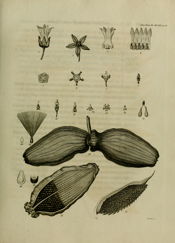 Transactions of the Linnean Society of London, Volume 12.djvu-95.png