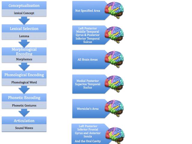 Psycholinguistics/Neural Components of Speech Production - Wikiversity