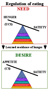 physiological myths about hunger and satiety