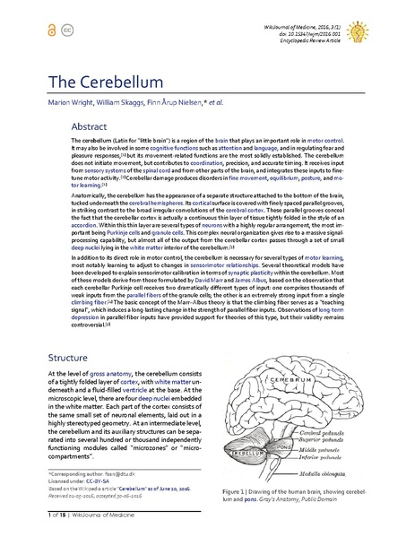 File:The Cerebellum.pdf