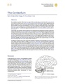 The Cerebellum.pdf