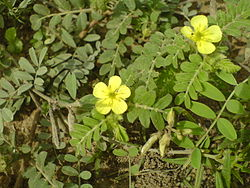 YellowFlowerChennai.jpg