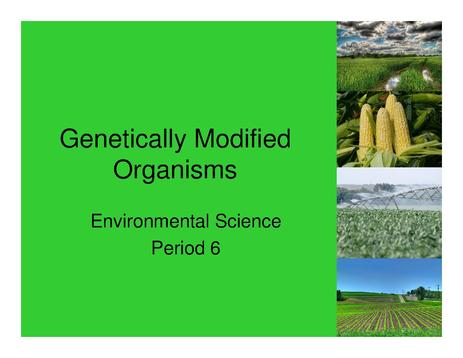 the positive effect of genetically modified organisms The initial conception of genetically modified organisms was to create a more efficient organism to feed the human population when we speak of crop protection, we realize that many insects and parasites effect naturally growing crops and damage them.