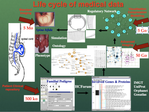 1.Life Cycle of Medical Data.png
