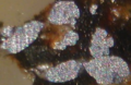 Native aluminum in polished section 2.png
