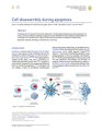 Cell disassembly during apoptosis.pdf