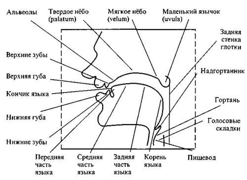 классификация звуков,